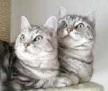 cat8-2